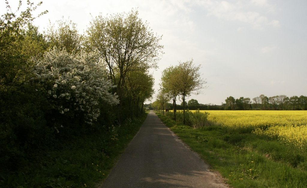 Weg zum Brunbarg